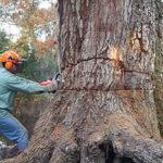 cutting tree chainsaw reviews