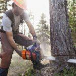 best cutting tree chainsaws